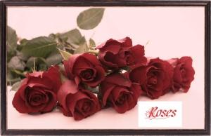 rutgers - roses 1