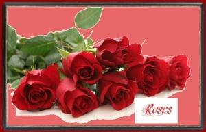 rutgers - roses 2