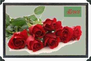 rutgers - roses 3